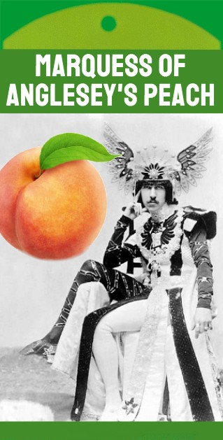 Marquess of Anglesey's Peach